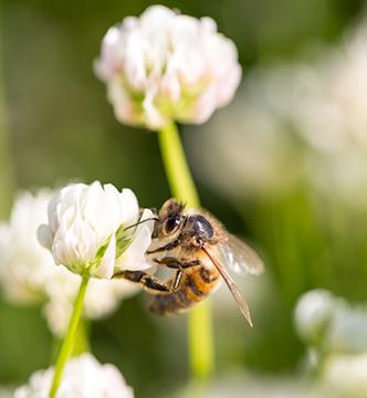abeille-biodiversite