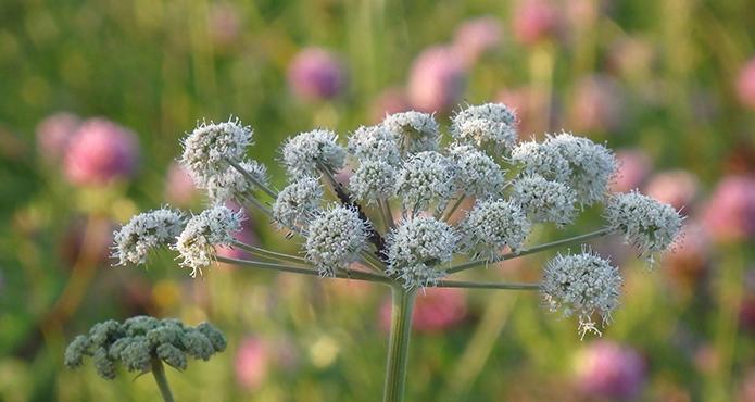 angeline-fleur-biodiversite